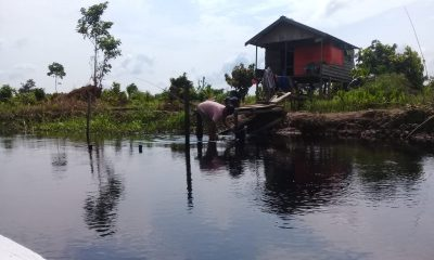 Taman Hutan Rakyat Orang Kayo Hitam Jambi